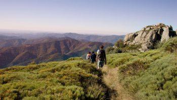 Des nuances infinies de vert s'offrent au promeneur qui descend des Rochers de Trenze jusqu'à Génolhac.