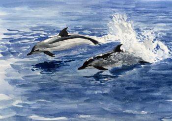 dessin-paul-dauphins2web