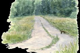 «La martre furtive est l'espèce espérée de ces attentes estivales et forestières. Quand elle parcourt son territoire, elle traverse nécessairement les allées. Parfois, elle les emprunte sur quelques dizaines de mètres. Après des centaines l'observations, l'émotion reste intacte.» / © Jean Chevallier