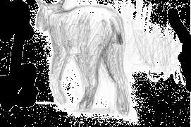 «Surveiller, dessiner pour occuper l'attente, pour le souvenir. Dessiner aussi pour avoir déjà le décor si un animal venait à passer. La forêt mixte de Bialowieza, en Pologne, évoque nos forêts de plaine. Alors, quand paraît le lynx exclu de nos rêves, il faut se pincer pour y croire. Il nous tourne le dos et son pas, rapide sans en avoir l'air, l'emmène au bout de l'allée, imprimant pour longtemps son image feutrée sur nos rétines.» / © Jean Chevallier