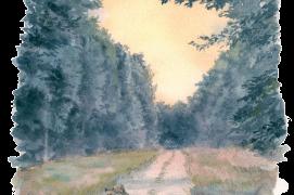 «Tous les affûts ne sont pas gagnants. Au point de se demander si la forêt est vraiment habitée… Heureusement que les chevreuils et les renards sont là pour sauver la mise.» / © Jean Chevallier