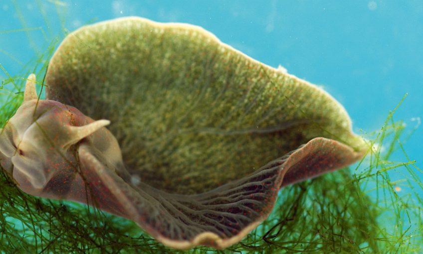 Symbiose : quand des animaux s'associent avec des plantes