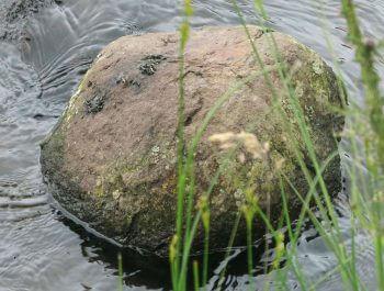 Enquêtez sur les empreintes d'animaux au bord de la rivière Epreintes de loutre