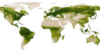 La couleur verte sur terre d'après le satellite Suomi NPP