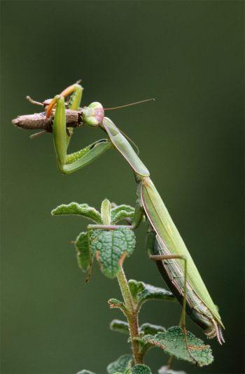 Vert, une couleur camouflage pour les animaux