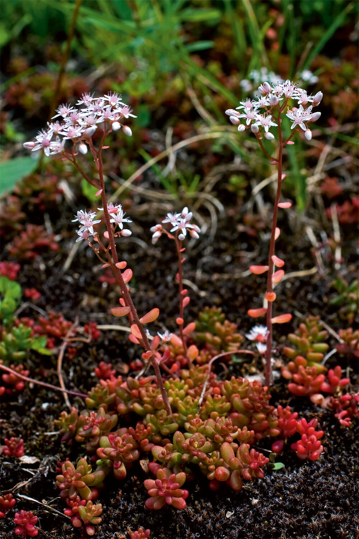 7 plantes aux feuilles hors-du-commun