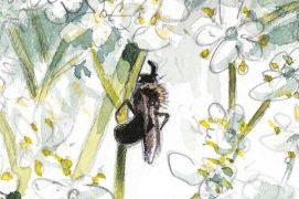 «Petite abeille sauvage au repos» / © Laurent Willenegger