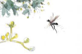 """«Petite mouche noire à ailes brunes, hyper-rapide, pattes pendantes, venant sans cesse sous les fleurs. Impossible à détailler à l'œil nu, dessinée après une capture """"vidéo"""" tant l'insecte est véloce.» / © Laurent Willenegger"""