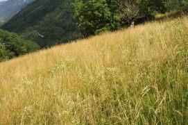 Prairie maigre sur colline aride: le repaire de l'apollon. / © Alexandre Scheurer