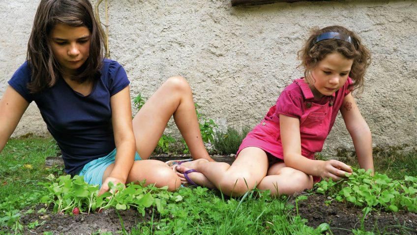 Semez des radis-taupes