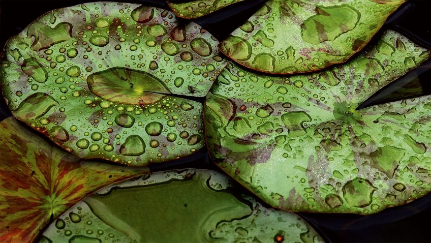 Feuilles vertes en tous genres