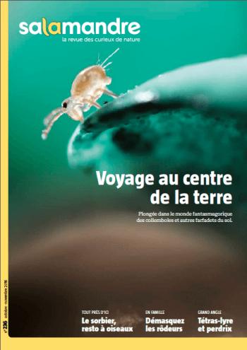 Salamandre 236 voyage au centre de la terre