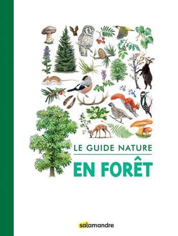 Un guide Salamandre pour explorer la forêt