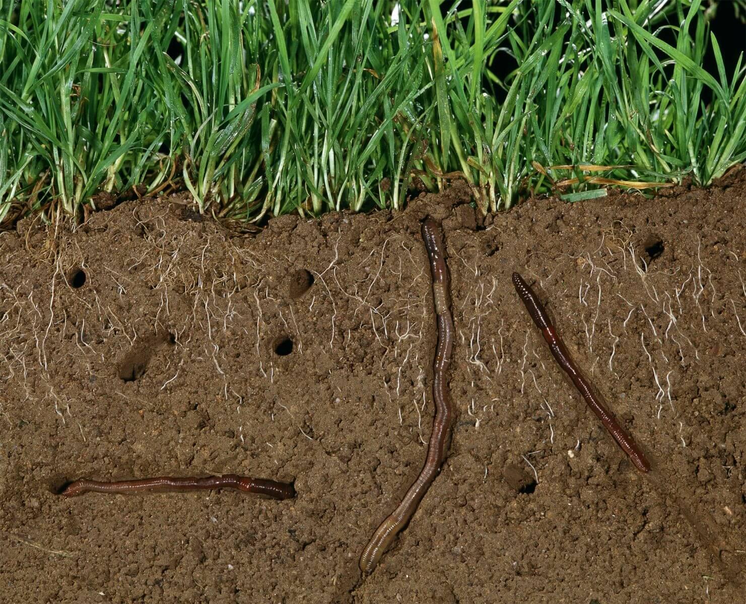 Les jardiniers de l 39 ombre la salamandre for Les decoratives brut de terre