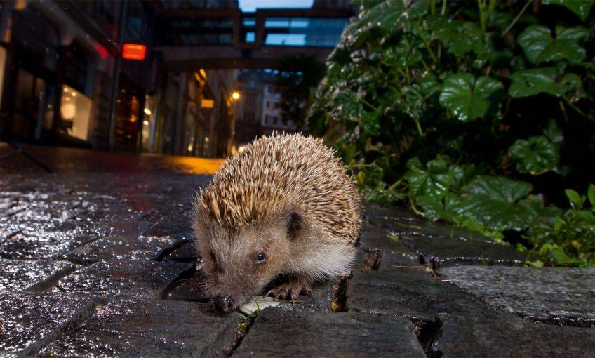 Pistez les empreintes des animaux qui visitent votre jardin la nuit