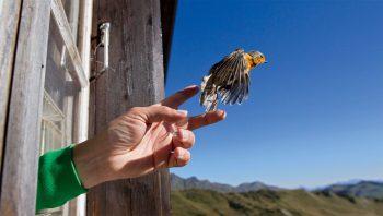 Comportement à adopter si un oiseau assommé a du mal à s'envoler