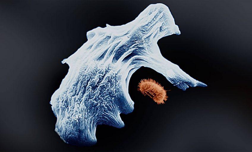 Tout savoir sur les bactéries et champignons du sol