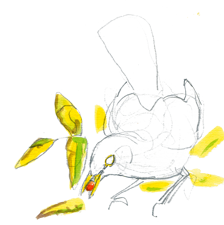 Resto chez le sorbier des oiseleurs