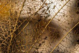 Marque de fabrique: une feuille criblée comme une passoire? C'est l'œuvre des vers enchytréides qui s'attaquent surtout au tissu du limbe foliaire.  / © Philippe Lebeaux