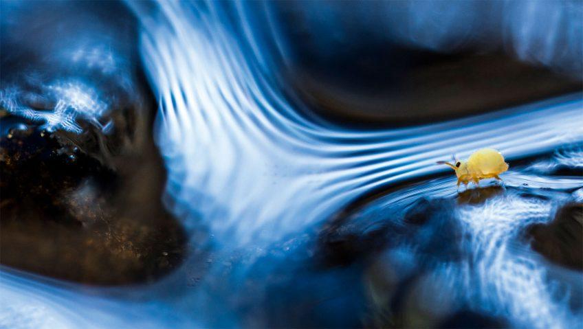 A la découverte des collemboles, petits invertébrés du sol
