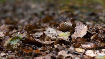 Sol forestier recouvert de feuilles en…
