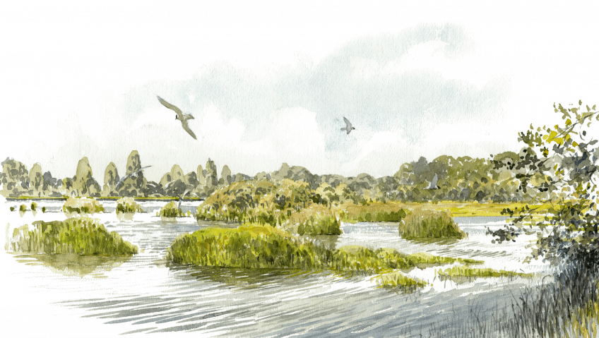 Les étangs de la Brenne