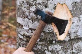 «Le bois mort est tout sauf mort. C'est du bois qui grouille de vie et enrichit la forêt.» Pascal Junod, inspecteur forestier du 3e arrondissement, canton de Neuchâtel  / © Sandro Campardo