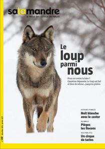 Couverture La Salamandre n°237 Le loup parmi nous