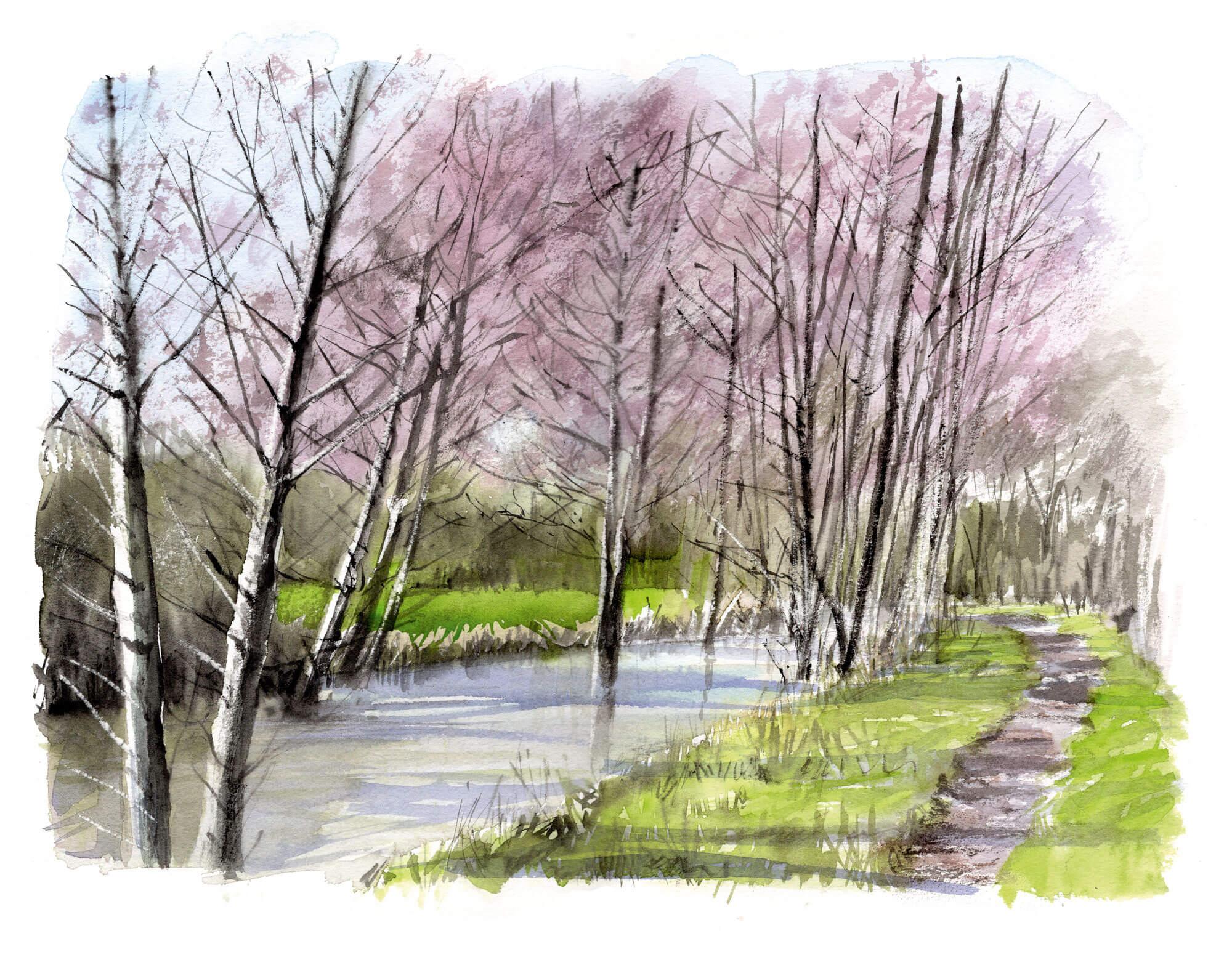 Un cirque de tarins des aulnes - La Salamandre dessin Aulnes au bord d'une rivière