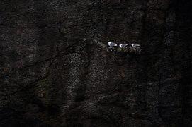 Cat. émotion 2 - Mouette tridactyle  / © Jonathan Lhoir