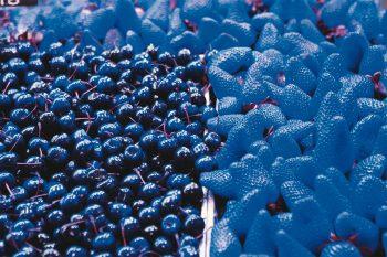 Cerises fraises rouges bleu