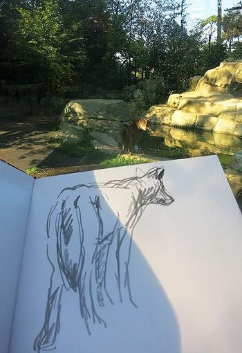 Coulisse du dossier loup à Paris avec Tsunéhiko Kuwabara, dessin nature Kuwabara loup Paris