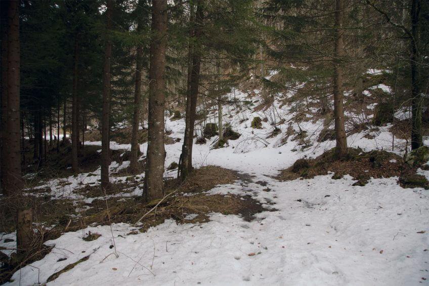 forêt neige passage Reportage autour des loups du Calanda dans les Grisons - La Salamandre