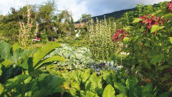 En Suisse comme en France, des campagnes sont en cours pour convaincre les jardiniers de renoncer aux pesticides. Un choix qui n'empêche nullement d'avoir de beaux légumes!