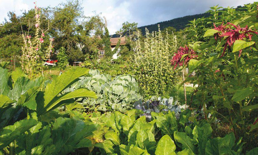 potager jardin