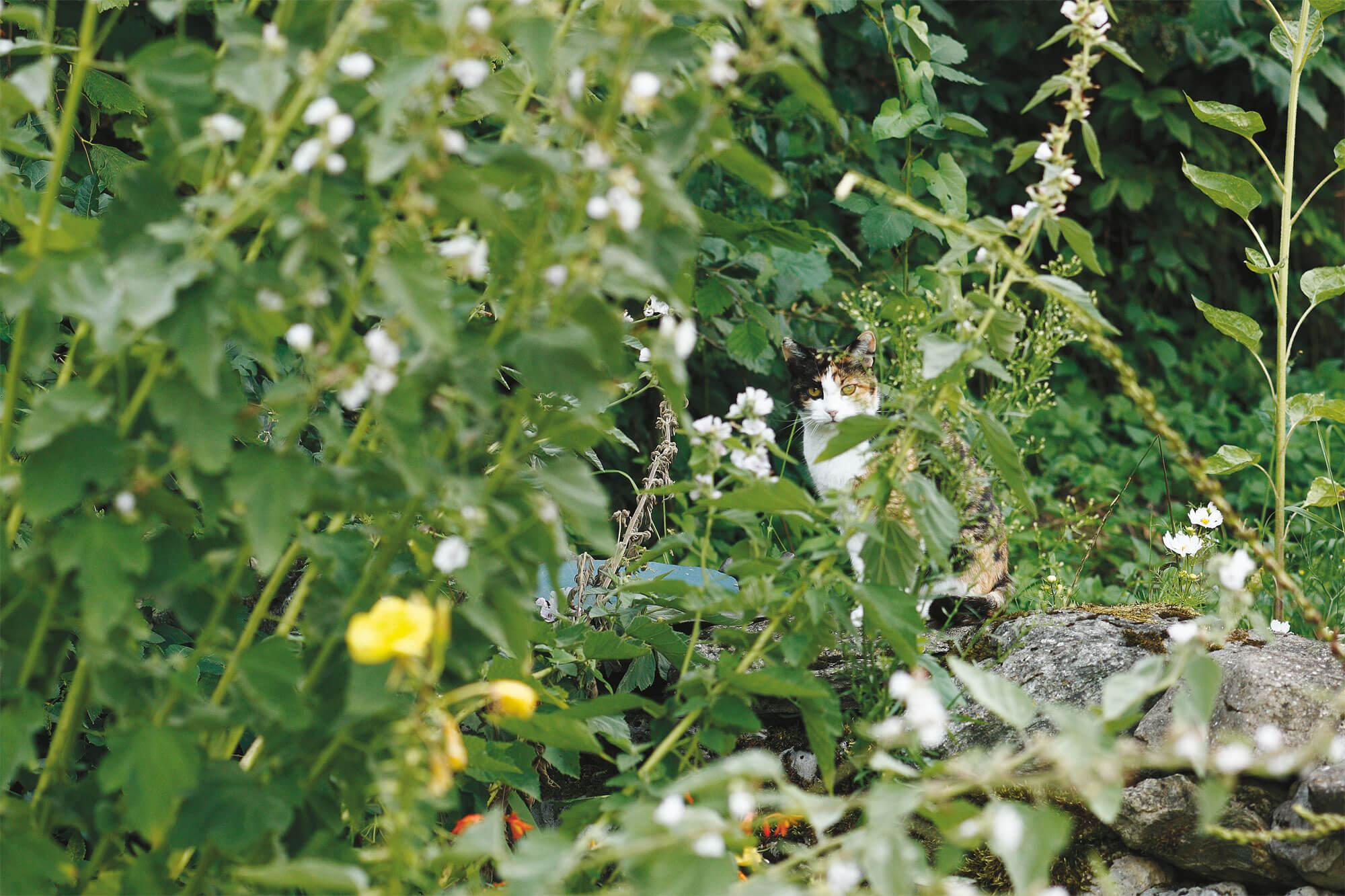 chat jardin prairie