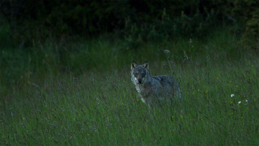 Extraits du livre La vallée des loups - La Salamandre