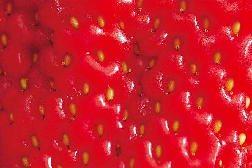 fraise zoom rouge