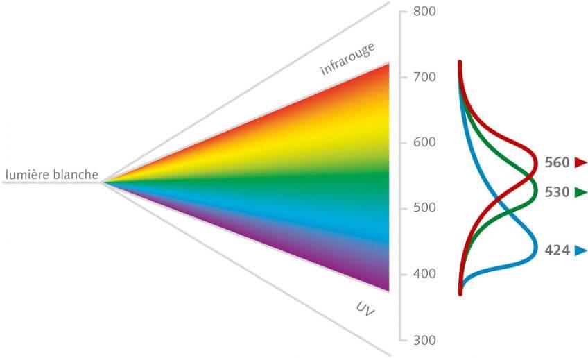 La couleur de la lumière selon les différentes longueurs d'onde schéma
