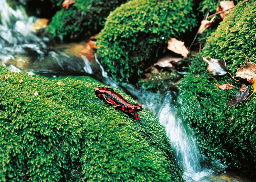 couleur irréel perception salamandre