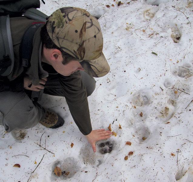 Reportage autour des loups du Calanda dans les Grisons - La Salamandre trace neige garde-faune loup