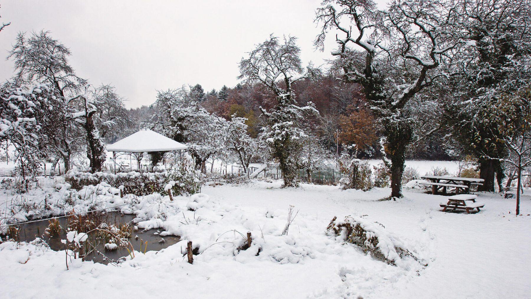 Le mois de f vrier au jardin oiseaux passagers du froid for Jardin en hiver
