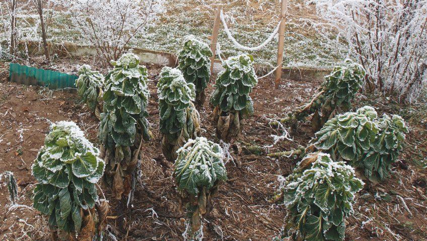 Un jardin figé givre hiver froid