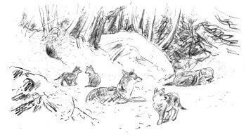 dessin Tsunehiko Kuwabara loup louveteaux