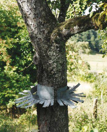 collerette découpée nichoir stop minou chat protection oiseaux