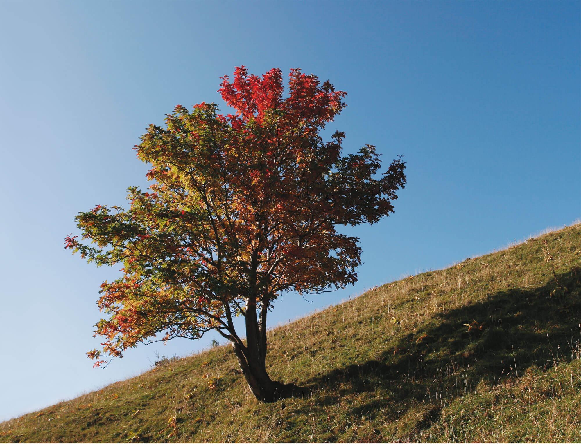 vision de l'homme arbre