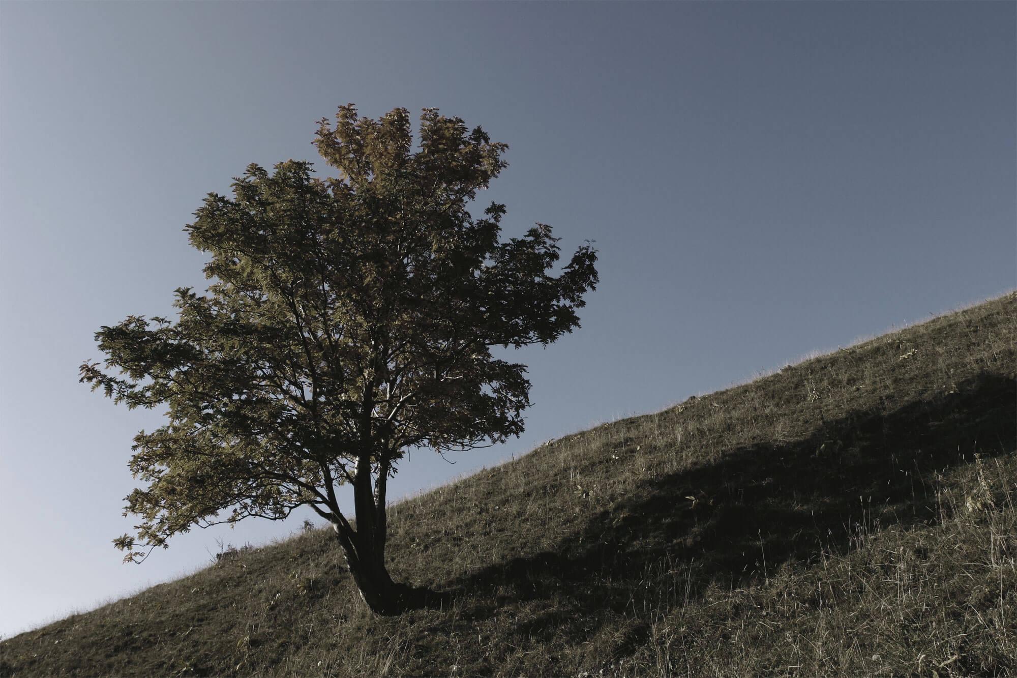 vision des mammifères arbre