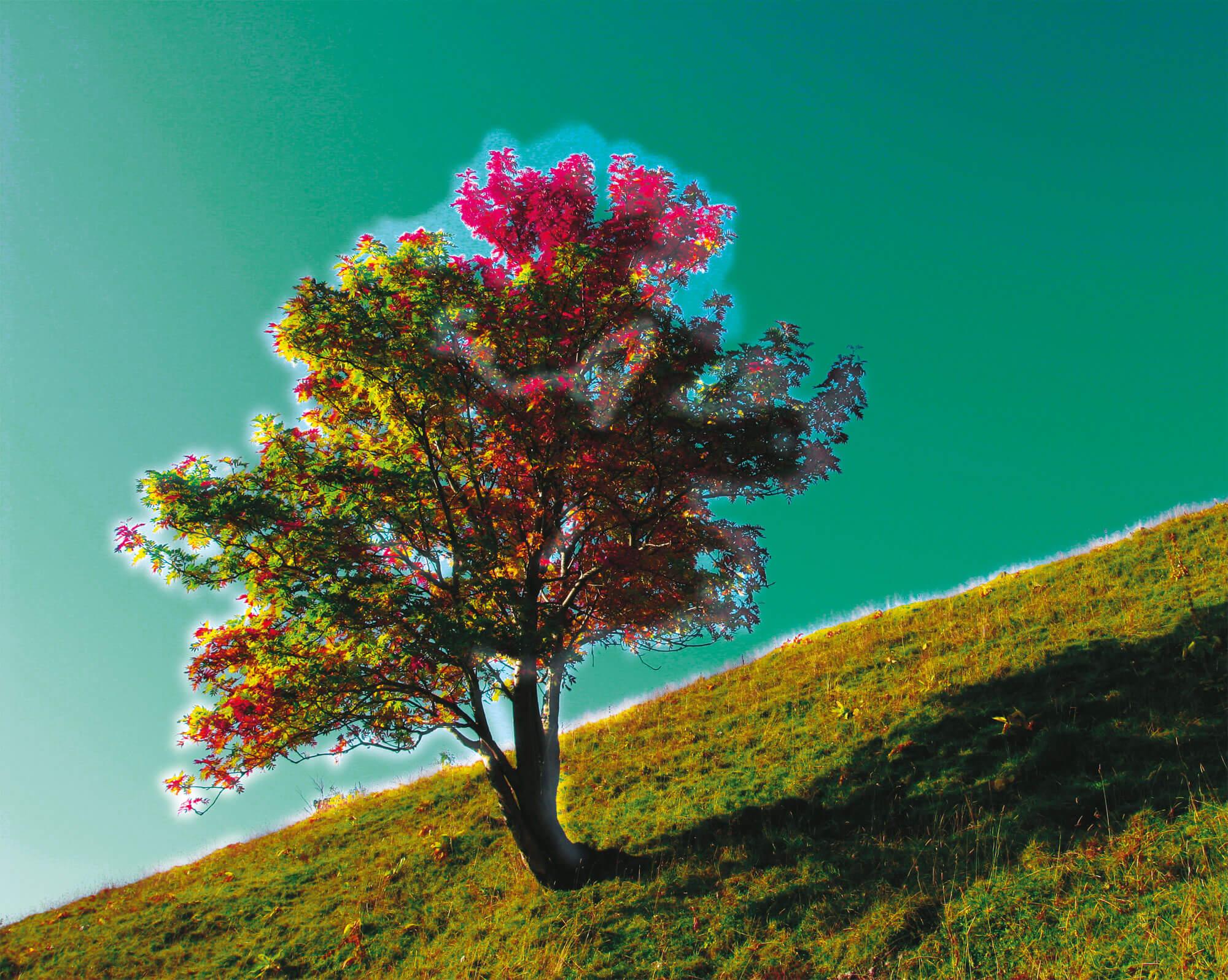 Vision des oiseaux ultraviolet arbre