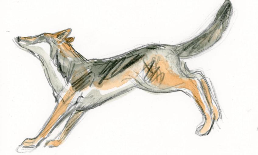 Le grand marathon, carte du loup en Europe - La Salamandre
