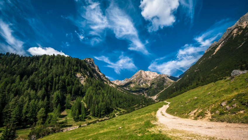 chemin montagne ciel nuage forêt